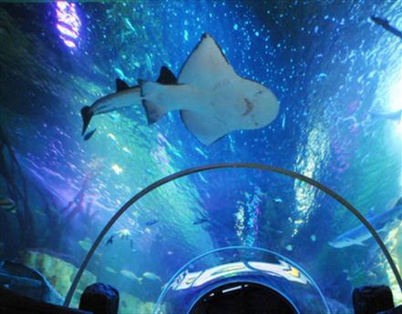 Octonauts Shark Mission at SEA LIFE Blackpool