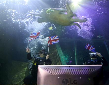 79-Year-Old Giant Sea Turtle Watching Her 16th Royal Wedding