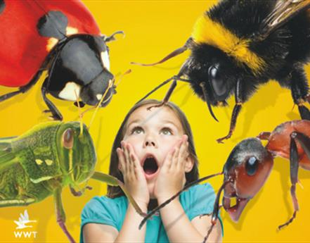 Have a buzzing day out at Martin Mere this summer as GIANT Bionic Bugs invade the centre