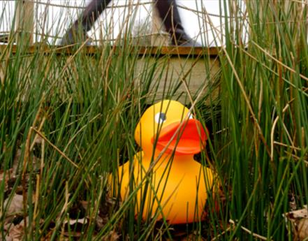 Giant Easter Duck Hunt this Easter at WWT Martin Mere Wetland Centre