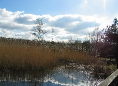 The Wildlife Trust's Mere Sands Wood