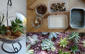 Terrarium Workshop by Sue Jeffries