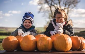 Halloween and Pumpkin Picking Patch at Thornton Hall Country Park