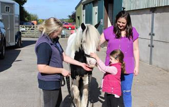 October Half Term at World Horse Welfare Penny Farm