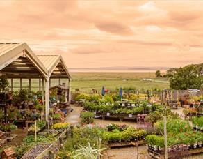 Bay View Garden Centre & Allium Eatery
